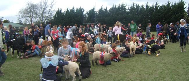 Drury School Calf Club & Gala