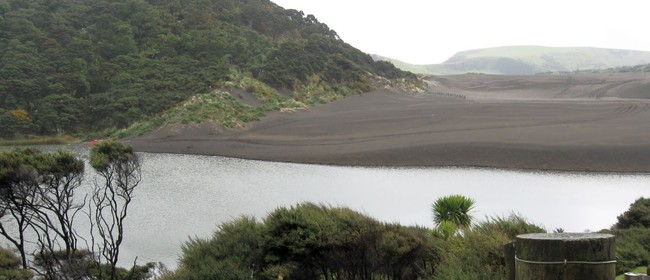 Tramp In the Bethells Area