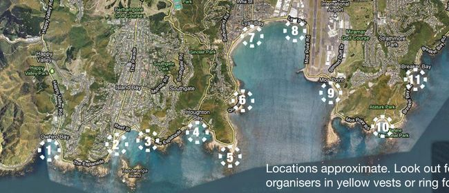 Wellington South Coast Clean-up