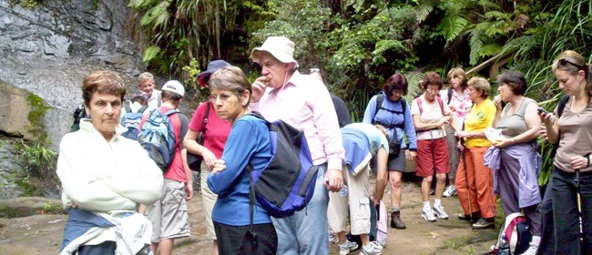 Tramp in the Waitakere Ranges