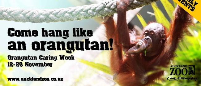 Hang Like an Orangutan