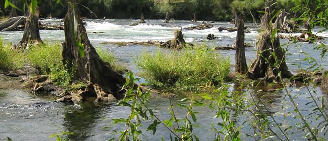 Rangitaiki River Kayak marathon
