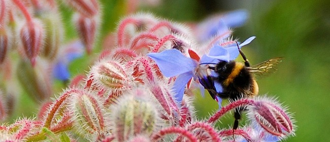 Wellington Botanic Garden Herb Garden Q&A