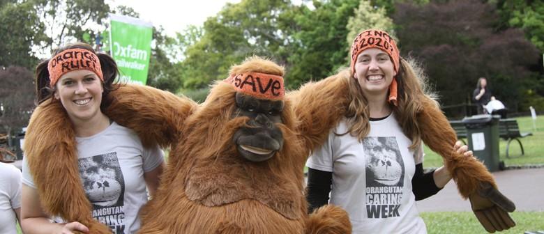 The Great Ape Race