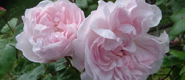 Rose Pruning Day