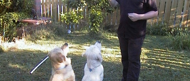 Dog Training Classes - Whangarei - Eventfinda