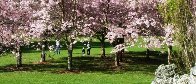 Cornwall Park Cherry Blossom Sundays