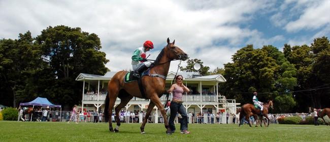 Interislander Summer Festival Tauranga Races