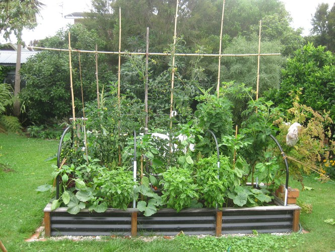 Small space big harvest edible garden design hamilton for Edible garden design ideas