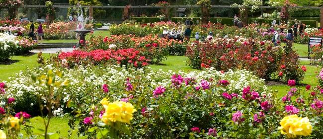 Botanic Garden Rose Festival