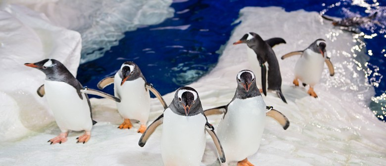 Kelly Tarlton's Sea Life Aquarium On-The-Ice Experience
