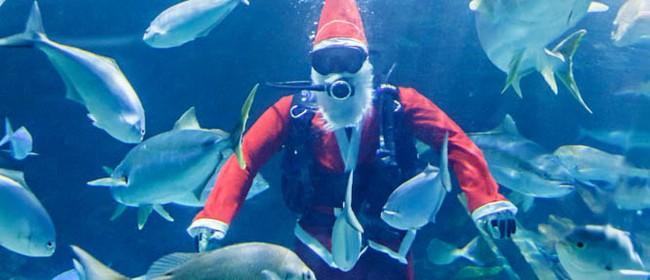 Santa Swims at Kelly Tarlton's Sea Life Aquarium