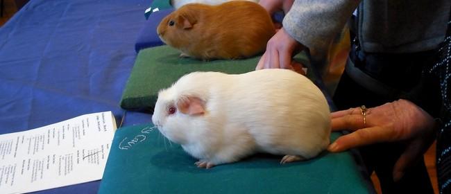 Guinea Pig Show