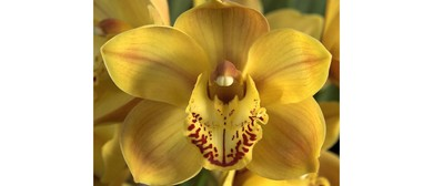 Waitakere Orchid Club Monthly Meetings