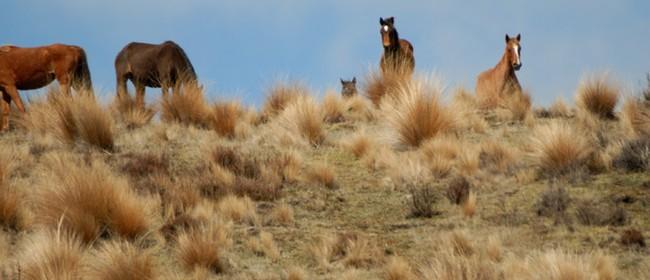 Wild at Heart; a Kaimanawa Horse Experience - Mahi Aroha