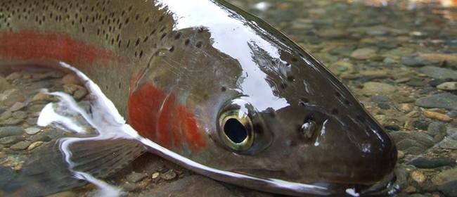 Taupo Fishery Fishing Seminar - Mahi Aroha