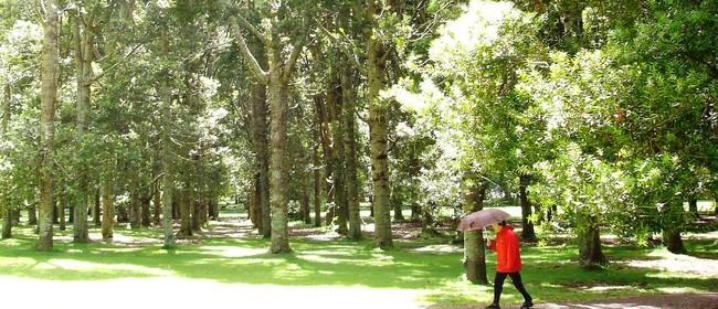 'Keep Kauri Standing - Kia Toitu He Kauri'  Display and Talk