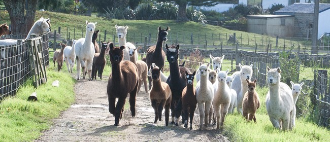 Christmas Craft Gala and Alpaca Open Day