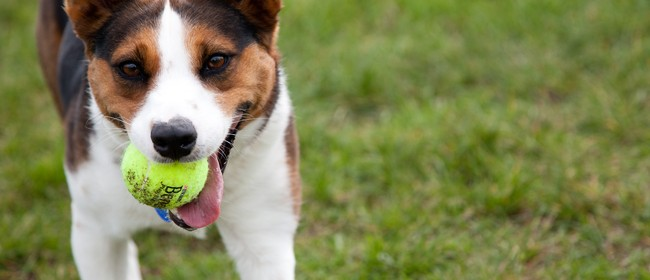 Beneful Playtime Tour - for You & Your Dog