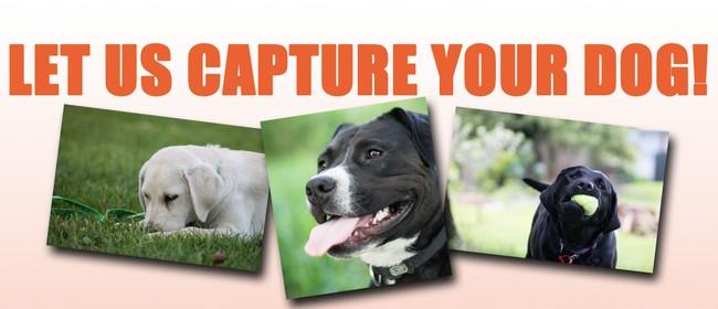 SPCA dog photo shoot fundraiser