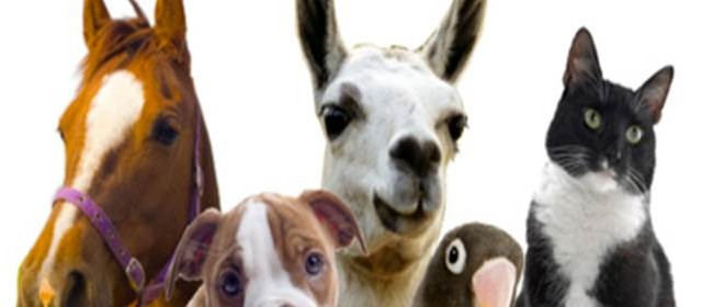 Animal Vibrational Therapy Workshop