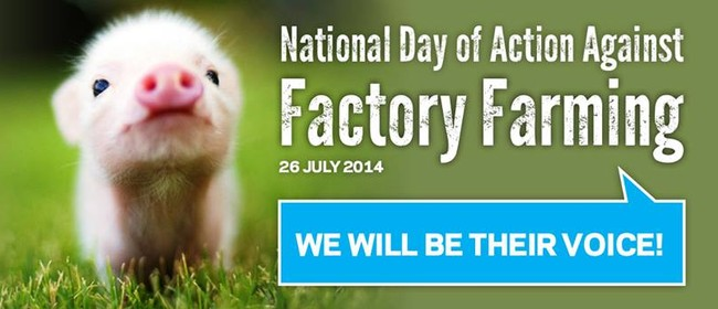 Dunedin Rally for Pigs: Stop Factory Farming