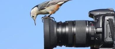 Digital Cameras - SLR