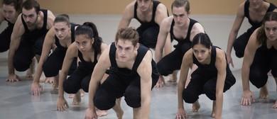 NZSD Insight Studio Performances