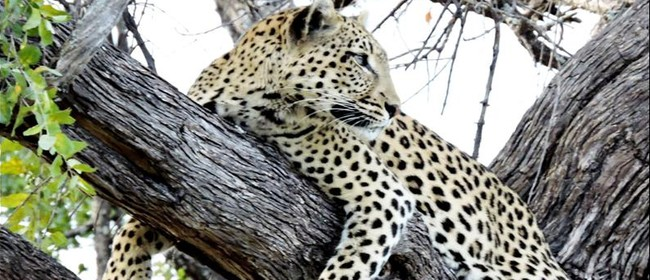 Africa's Animals
