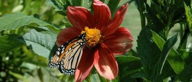 Mindfulness Retreat Weekend