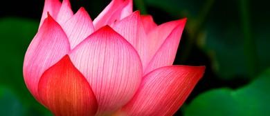 Healing & Relaxation Retreat