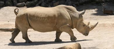 Rhino Weekend