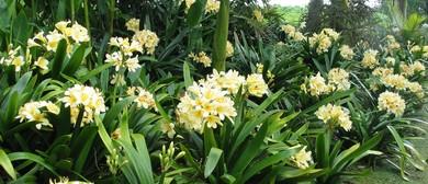 Gardenza's Spring Festival & Clivia Pageant