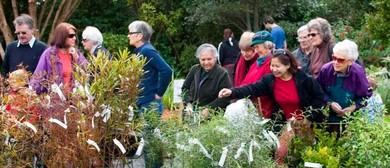 Otari-Wilton's Bush Open Day and Plant Sale