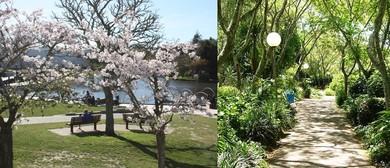 An Historical Tour of the University of Waikato Gardens