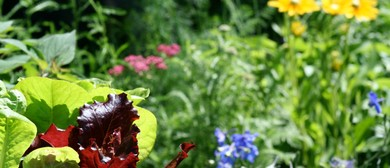 Edible Backyard Open Day