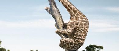 Mt Pleasant Giraffe Unveiling