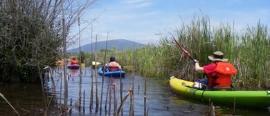 Waimarino Wetland Kayak