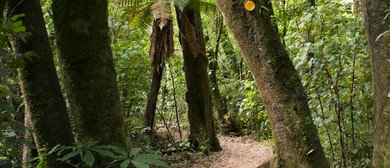 Fern Walk - Manawatu Walking Festival