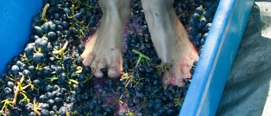 Waiheke Vintage Festival - Grape Harvest & Foot Stomp