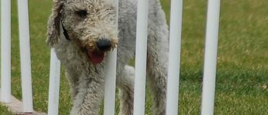 Central Allbreeds Dog Training School Summer Fair