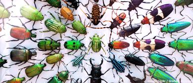Bug Fair