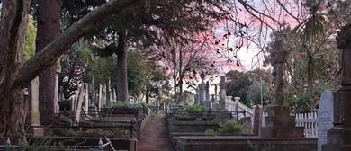 Napier Hill Cemetery Walks