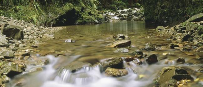 Maungakotukutuku Meander