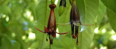 Botanic Bonanza: Evening Talk - Parks Week