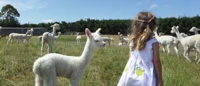 National Alpaca Days