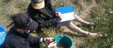Kakahi- Freshwater Mussel - Monitoring