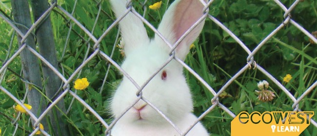 Keeping Rabbits In a Productive Permaculture System