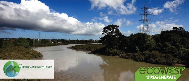 Explore the Whau with the Whau River Catchment Trust