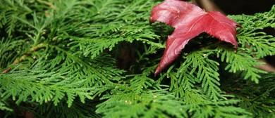Late Summer Botanical Magic - Parks Week